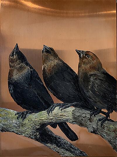 Darren Johnson, 'Three Brown-headed cowbirds', 2018