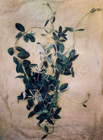 Diana Bloomfield, 'Honeysuckle', 2018