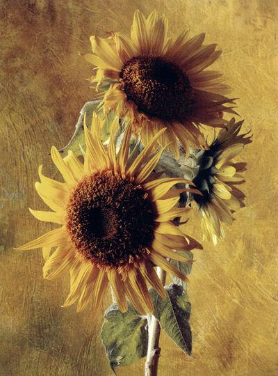 Cy DeCosse, 'Sunflower of the Incas'