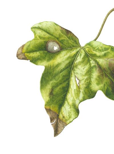 Julia Trickey, 'Shape, Pattern, Structure - Ivy Leaf', 2019