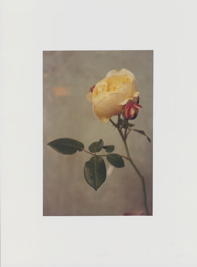 Tom Beard, 'Rose', 2020