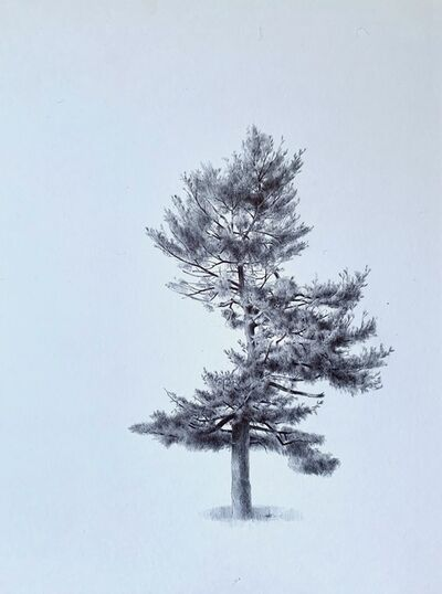 Dina Brodsky, 'Untitled (Spiraling Tree)', 2020