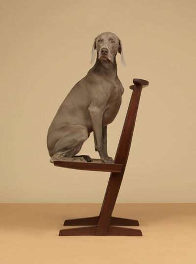 William Wegman, 'Cantilever', 2015