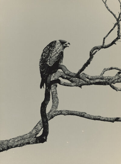 Yamamoto Masao, '#1666, Kawa=Flow', n.d.