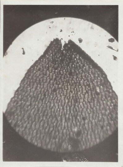 Imre Kinszki, 'Macro Photograph', 1928