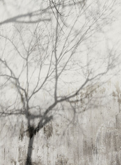 Barbara Edelstein, 'Reflections • Nature Series', 2013