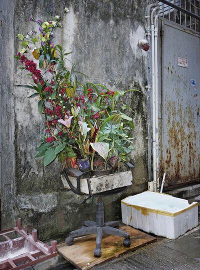 Michael Wolf (b. 1954), 'Hong Kong Flora', 2015