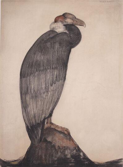 Willem van den Berg, 'The Andean Condor', ca. 1930