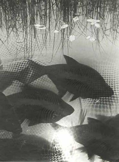 Heinz Hajek-Halke, 'Dreaming Fish', 1930