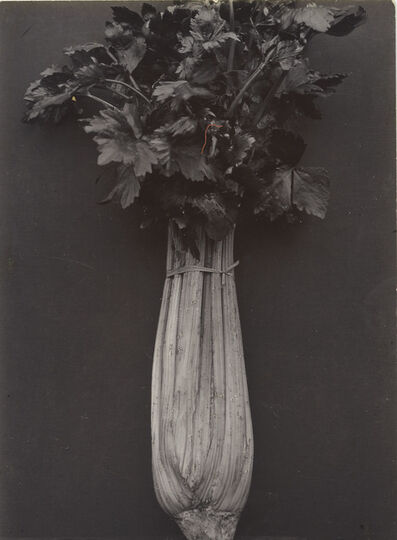 Charles Jones, 'Celery Wright's White', Probably executed about 1895-1910