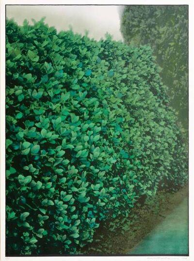 Ivor Abrahams, 'Hedges (green)', 1977