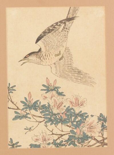 Imao Keinen, 'Crisantemos y capuchino  (菊花-沈香鳥)', 1892