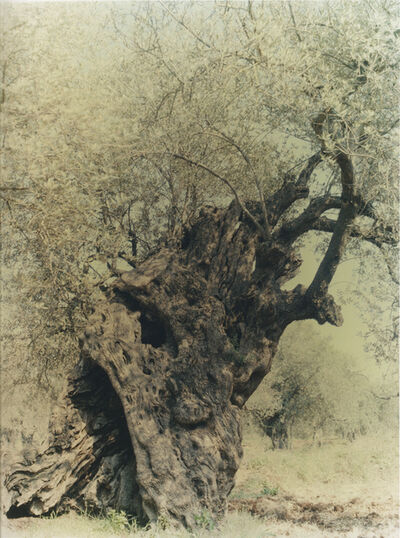 Ori Gersht, 'Olive 17', 2004
