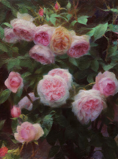 Adrienne Stein, 'Oxford Roses', 2021