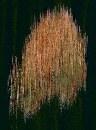 Albert Watson, 'Isle of Skye, Reeds, Scotland', 2013