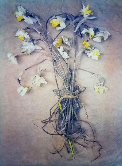 Diana Bloomfield, 'Daffodils', 2019