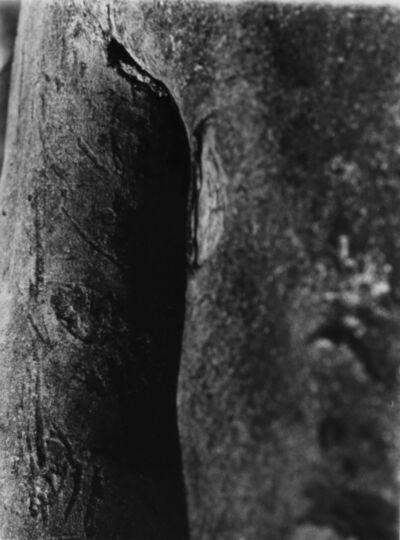 Ricard Terré, 'Sin título', 1999