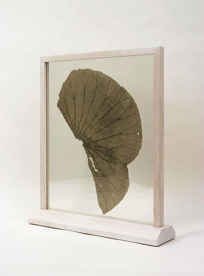 Gabriel Orozco, 'Lotus Leaf', 2003