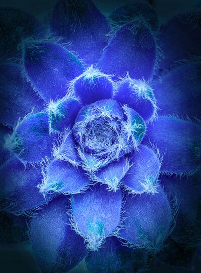 Jeff Robb, 'Blue Heart ', 2012