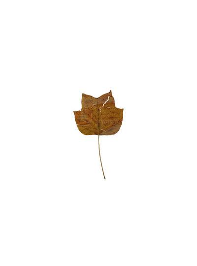 Emilia Sandoval, 'Muestrario de hojas VII, De la serie Botanica: Nuevas Especies', 2012