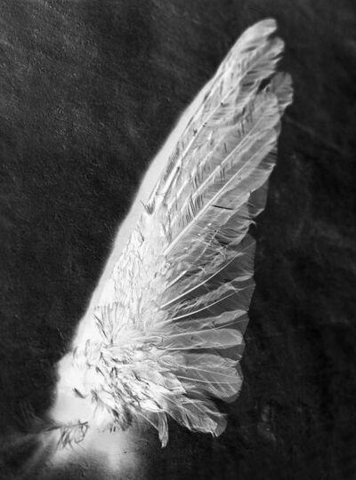 Patricia Lagarde, 'Melancolía. Inventario - Ala de colibrí', 2014