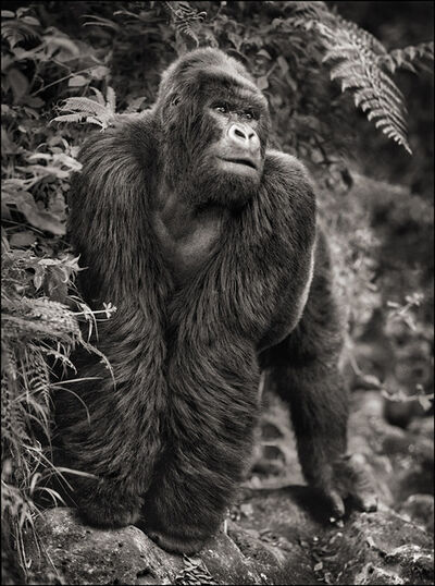 Nick Brandt, 'Gorilla on Rock ', 2008