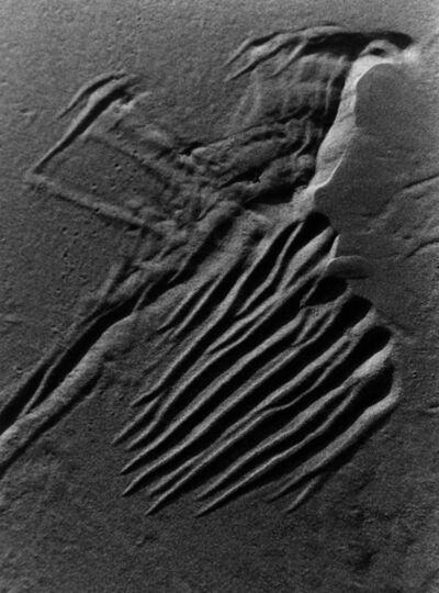Lucien Clergue, 'L'oiseau des sables, Camargue', 2000