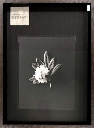 Nelli Palomäki, 'Rhododendron', 2019
