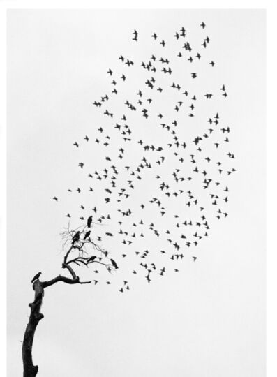 Pentti Sammallahti, 'Delhi, India (Flock of Birds)', 1999