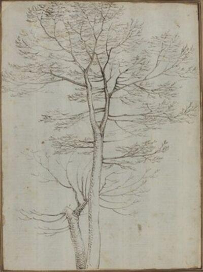 Baccio della Porta, called Fra Bartolommeo, 'Bare Tree [verso]'