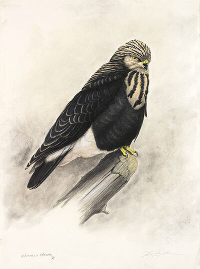 Tony Angell, 'Winter's Hawk', 2021