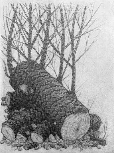 Eric Beltz, 'Noah's Woodlot', 2005