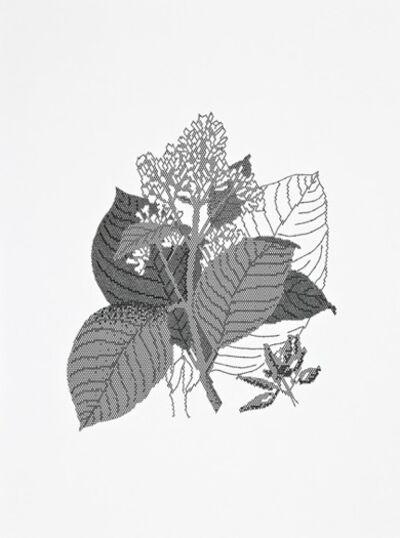Johanna Calle, 'Traducciones', 2009