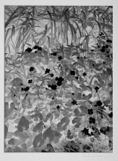 Paul Caponigro, 'Brewster, New York', 1963