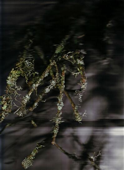 Patrick Beaulieu, 'Poussières de forêt (Révélations) 2', 2009