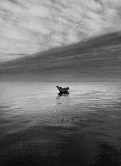 Sebastião Salgado, 'Southern Right Whale Tail, Valdés Peninsula, Argentina', 2004