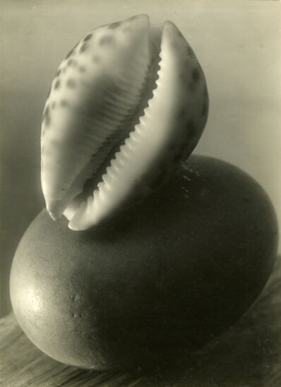 Josef Sudek, 'Untitled (Sea shell still life)', 1950-1954