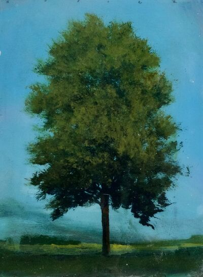 Peter Hoffer, 'Eucalyptus', 2021