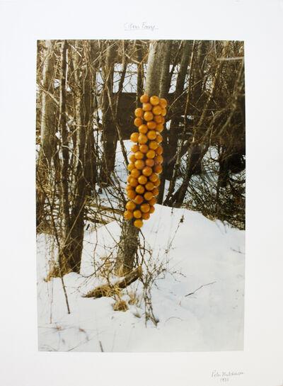 Peter Arthur Hutchinson, 'Citrus Freeze', 1980