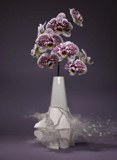 Martin Klimas, 'Orchidaceae X', 2019