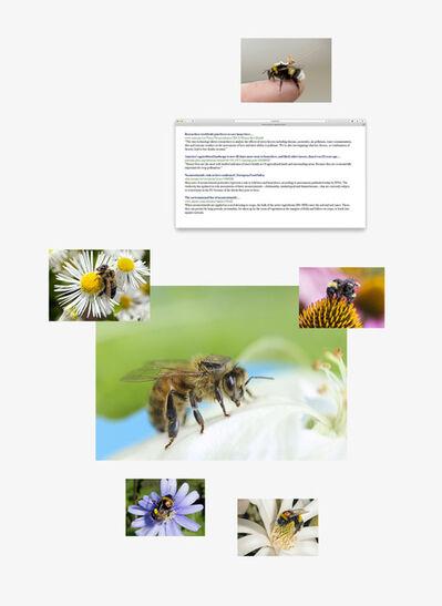 Sanna Kannisto, 'Tracking bees', 2019