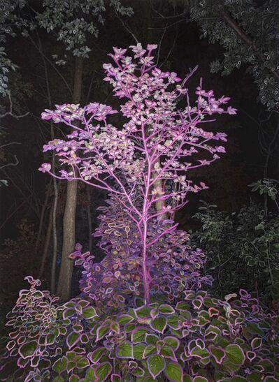 Sarah Anne Johnson, 'Pink Tree at Night', 2018
