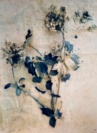 Diana Bloomfield, 'Dried Hydrangeas II ', 2018