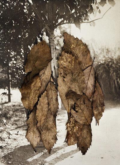 Anni Leppälä, 'Leaves II (The Couple)', 2013