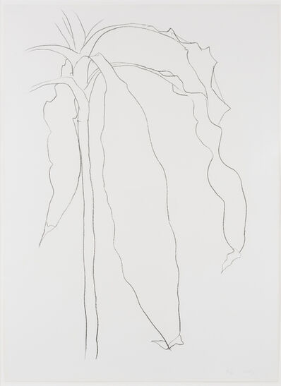 Ellsworth Kelly, 'Dracena I, from Series of Plant and Flower Lithographs', 1983-1985