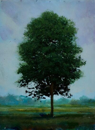 Peter Hoffer, 'Young Elm', 2021