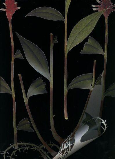 Chong Weixin, 'Specimen 1', 2014-2015