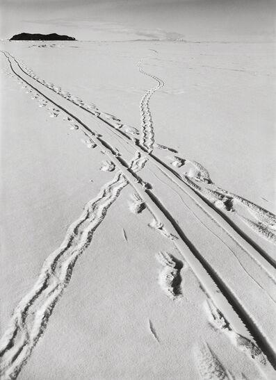 Herbert George Ponting, 'ADELIE PENGUIN TRACKS AND SLEDGE TRACK CROSSING, 8 DECEMBER 1911', 1911