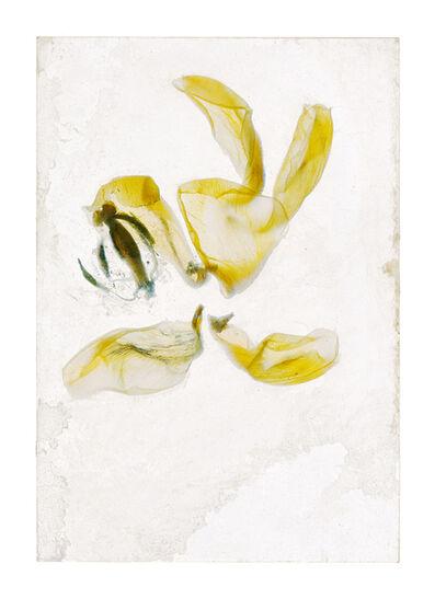 Brigitte Lustenberger, 'Flowers Unknown 16', 2020