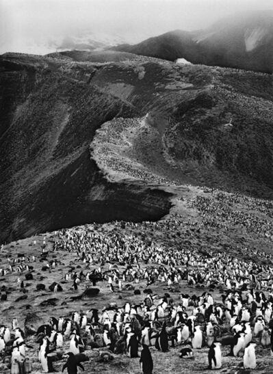 Sebastião Salgado, 'Chinstrap Penguins (Pygoscelis Antartica), Deception Island, Antarctica', 2005